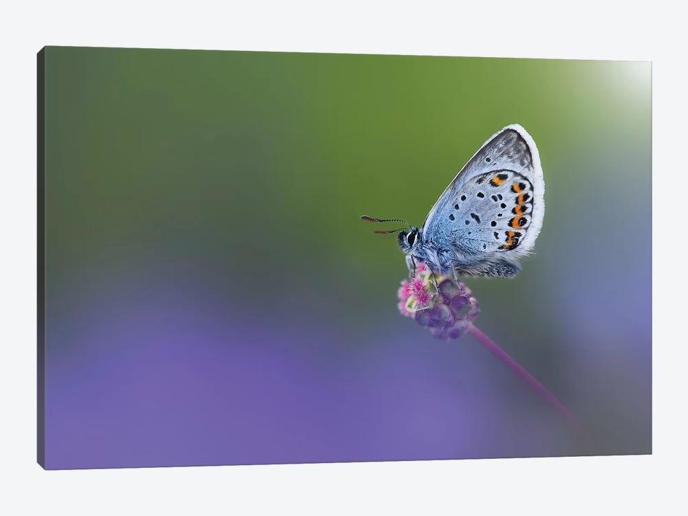 Butterfly II by Bess Hamiti 1-piece Art Print
