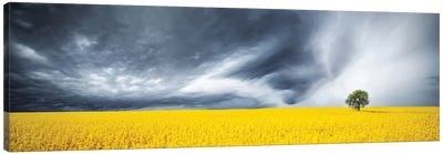 Canola Field Canvas Art Print