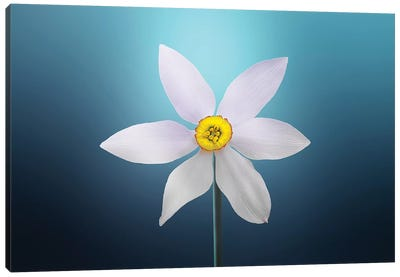 Flower Paradise On Blue Background Canvas Art Print