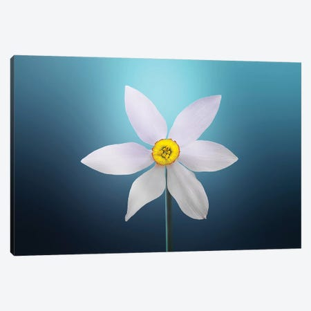 Flower Paradise On Blue Background Canvas Print #OXM4201} by Bess Hamiti Canvas Artwork