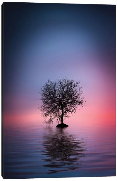 Lone Tree Canvas Art Print