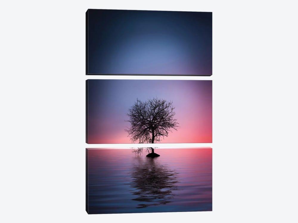 Lone Tree by Bess Hamiti 3-piece Canvas Artwork