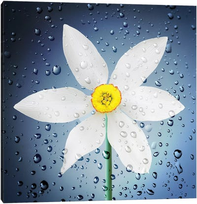 The Paradise Of Flowers After The Rain Canvas Art Print