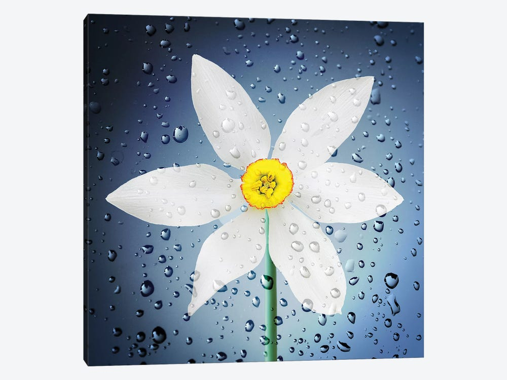 The Paradise Of Flowers After The Rain by Bess Hamiti 1-piece Canvas Wall Art