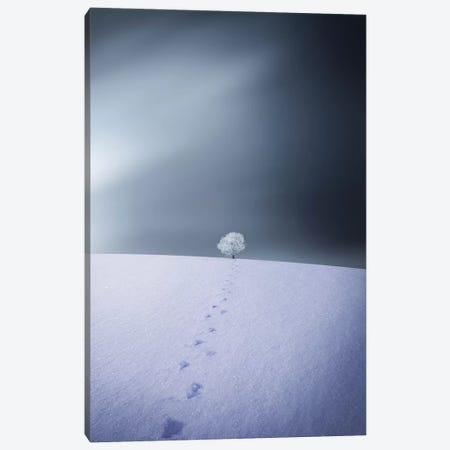 Winter IV Canvas Print #OXM4211} by Bess Hamiti Canvas Print