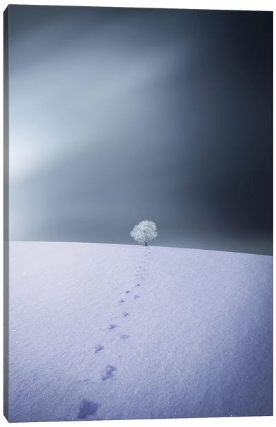Winter IV Canvas Art Print