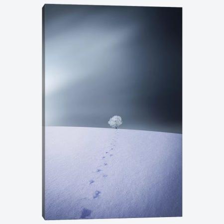 Winter IV Canvas Print #OXM4211} by Bess Hamiti Canvas Print