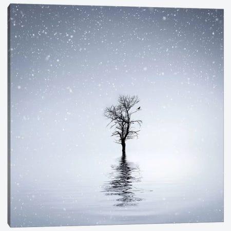 Winter Scene At Batlava Lake Canvas Print #OXM4212} by Bess Hamiti Canvas Print
