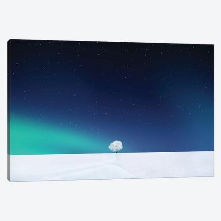 Winter Tree II Canvas Print #OXM4213} by Bess Hamiti Canvas Print