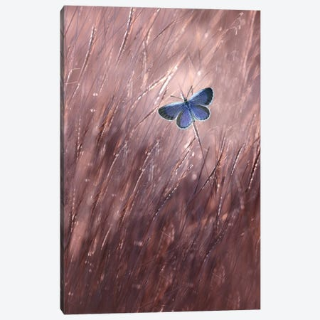 Beautiful Butterfly Canvas Print #OXM4216} by Edy Pamungkas Canvas Artwork