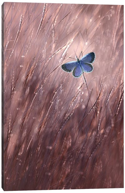Beautiful Butterfly I Canvas Art Print
