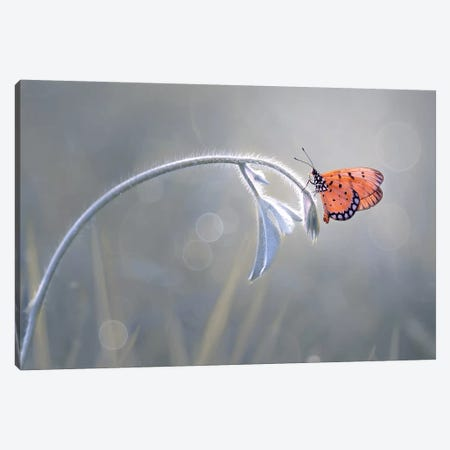 Beautiful Butterfly II Canvas Print #OXM4217} by Edy Pamungkas Canvas Wall Art