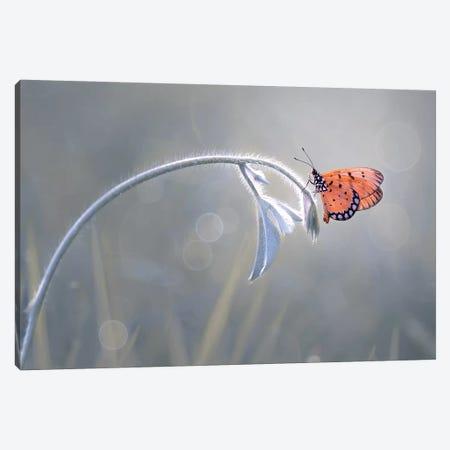 Beautiful Butterfly II Canvas Print #OXM4217} by Edy Pamungkas Canvas Wall Art