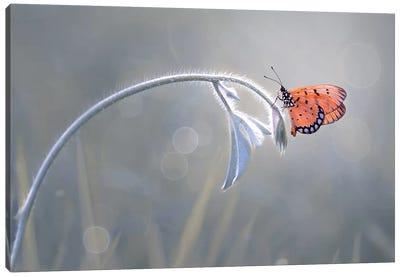 Beautiful Butterfly II Canvas Art Print