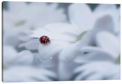 Beautiful Ladybug Canvas Art Print