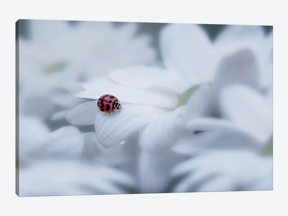 Beautiful Ladybug 1-piece Canvas Art Print