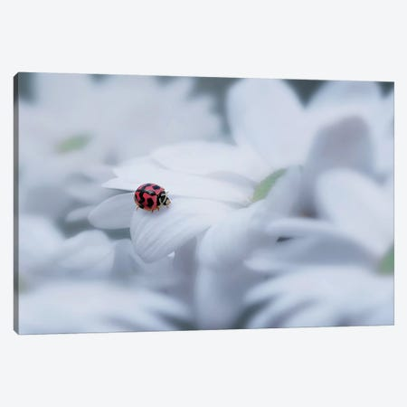 Beautiful Ladybug Canvas Print #OXM4218} by Edy Pamungkas Canvas Print