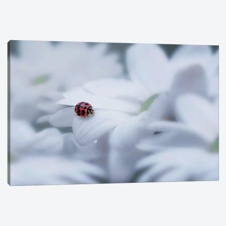 Beautiful Ladybug Canvas Print #OXM4218} by Edy Pamungkas Canvas Print