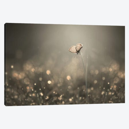 Dream Light Canvas Print #OXM4225} by Edy Pamungkas Canvas Print