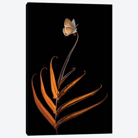 Elok 3-Piece Canvas #OXM4226} by Edy Pamungkas Canvas Print
