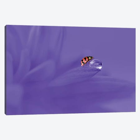 Ladybug Canvas Print #OXM4229} by Edy Pamungkas Canvas Art