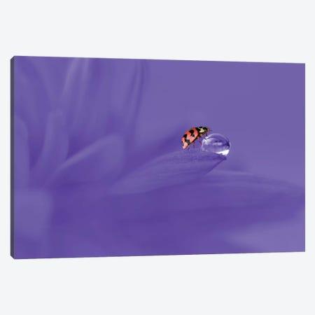 Ladybug Canvas Print #OXM4229} by Edy Pamungkas Canvas Art