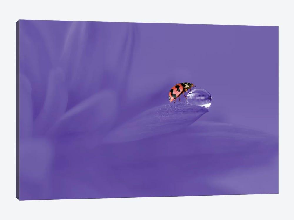 Ladybug by Edy Pamungkas 1-piece Canvas Art Print