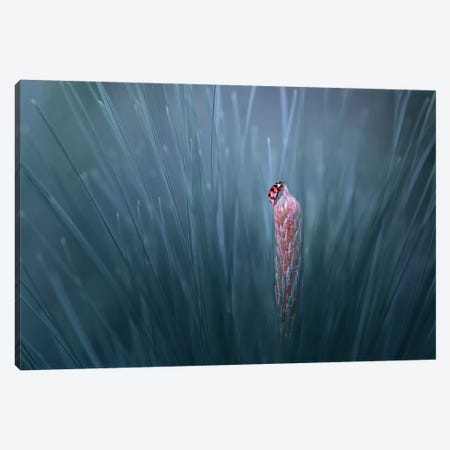 On The Top Canvas Print #OXM4243} by Edy Pamungkas Canvas Wall Art