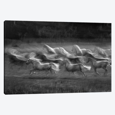 Stampedo Canvas Print #OXM424} by Milan Malovrh Canvas Print