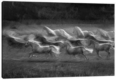 Stampedo Canvas Print #OXM424