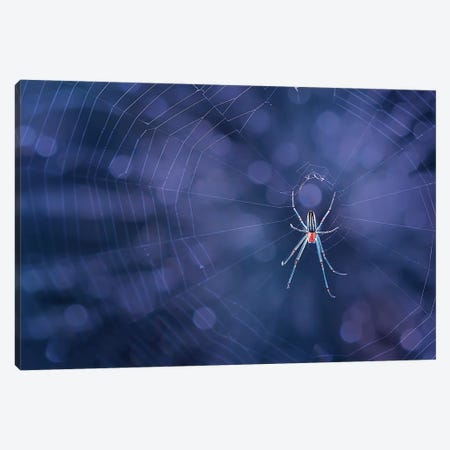 Spider Canvas Print #OXM4250} by Edy Pamungkas Canvas Art Print