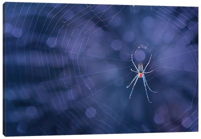 Spider Canvas Art Print