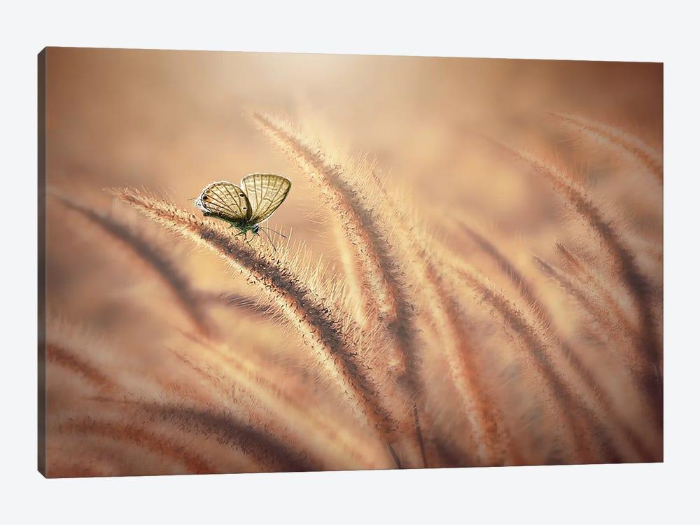 Summer Day II by Edy Pamungkas 1-piece Canvas Art Print