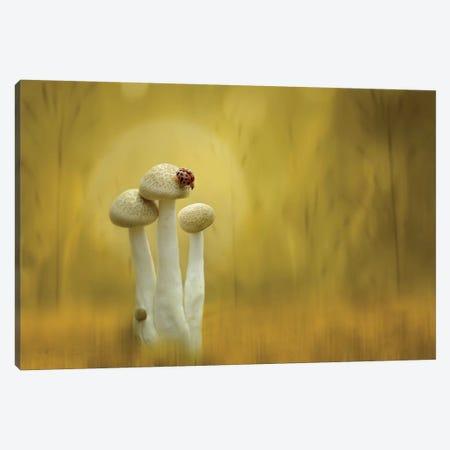 Twilight Canvas Print #OXM4256} by Edy Pamungkas Canvas Artwork