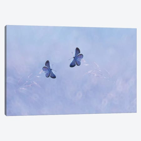 Two Butterflies I Canvas Print #OXM4257} by Edy Pamungkas Canvas Artwork