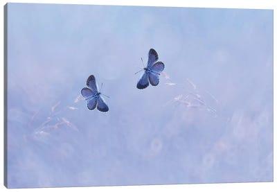 Two Butterflies I Canvas Art Print
