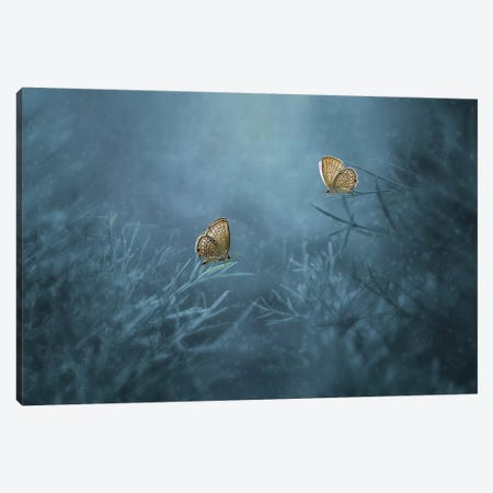 Two Butterflies II Canvas Print #OXM4258} by Edy Pamungkas Canvas Print