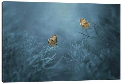 Two Butterflies II Canvas Art Print