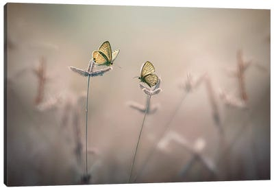 With You III Canvas Art Print