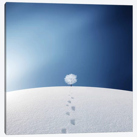 A Tree In The Field Canvas Print #OXM4270} by Bess Hamiti Canvas Art Print