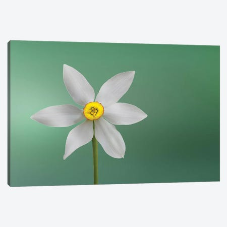 Flower Of Paradise Canvas Print #OXM4275} by Bess Hamiti Canvas Wall Art