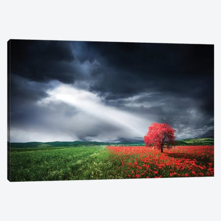 Red Tree In Meadow With Poppies Canvas Print #OXM4278} by Bess Hamiti Canvas Art Print