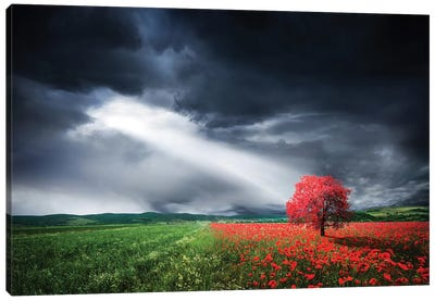 Red Tree In Meadow With Poppies Canvas Art Print
