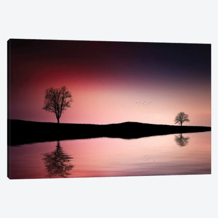Reflections Trees Canvas Print #OXM4279} by Bess Hamiti Canvas Art Print