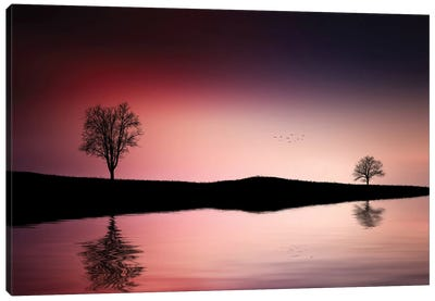 Reflections Trees Canvas Art Print