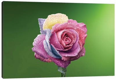 Rose Colorful Canvas Art Print