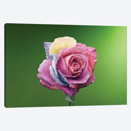 Rose Colorful 3-Piece Canvas #OXM4280} by Bess Hamiti Canvas Wall Art