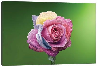 Rose Colorful Canvas Art Print