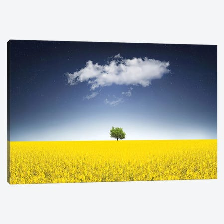 Surreal Canola Field Canvas Print #OXM4282} by Bess Hamiti Canvas Wall Art