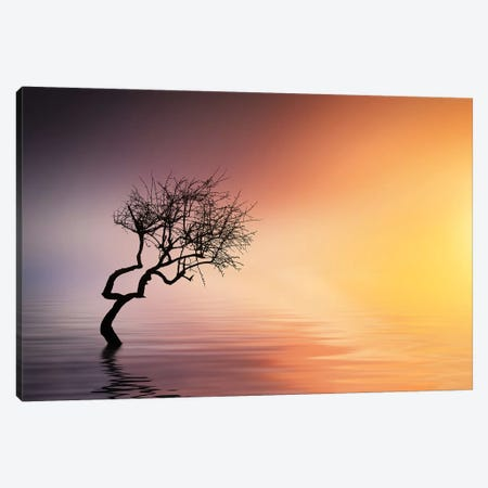 Tree At Lake Canvas Print #OXM4284} by Bess Hamiti Canvas Art Print